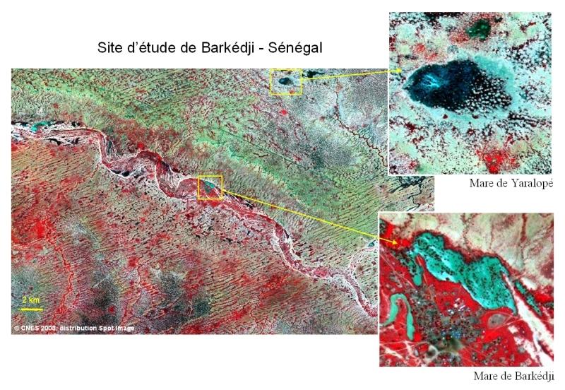 Images spatiales du site de Barkédji (Sénégal) délivrées par le satellite Spot 5 à une résolution de 10 m, le 26 août 2003. Crédits : CNES/ Spot Images.